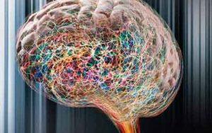 A más edad menos neuronas